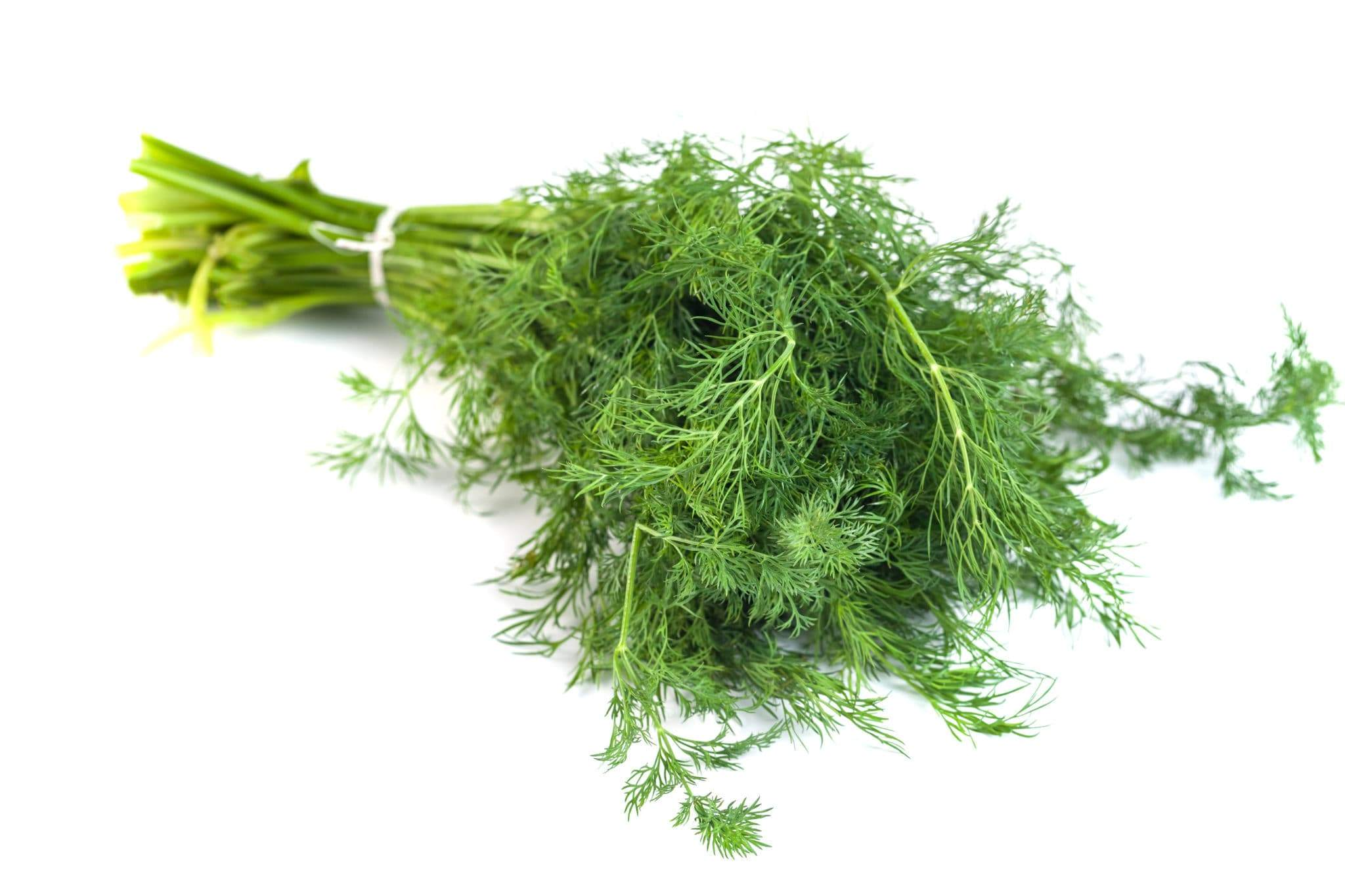 The Naturopathic Kitchen: Dill 101