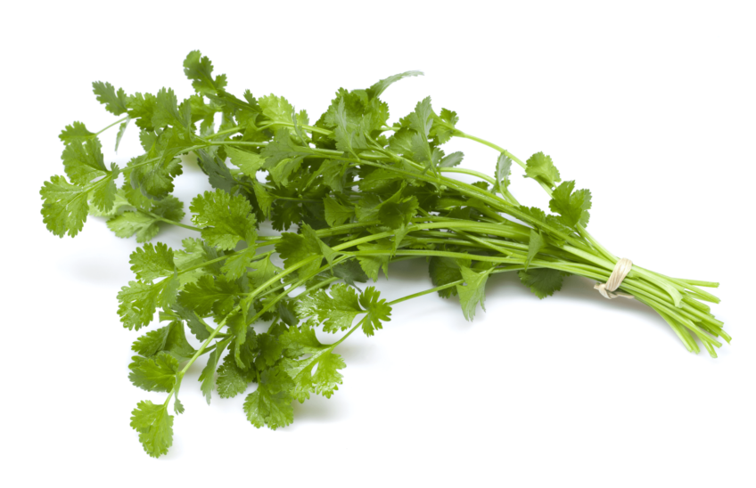 The Naturopathic Kitchen: Cilantro 101