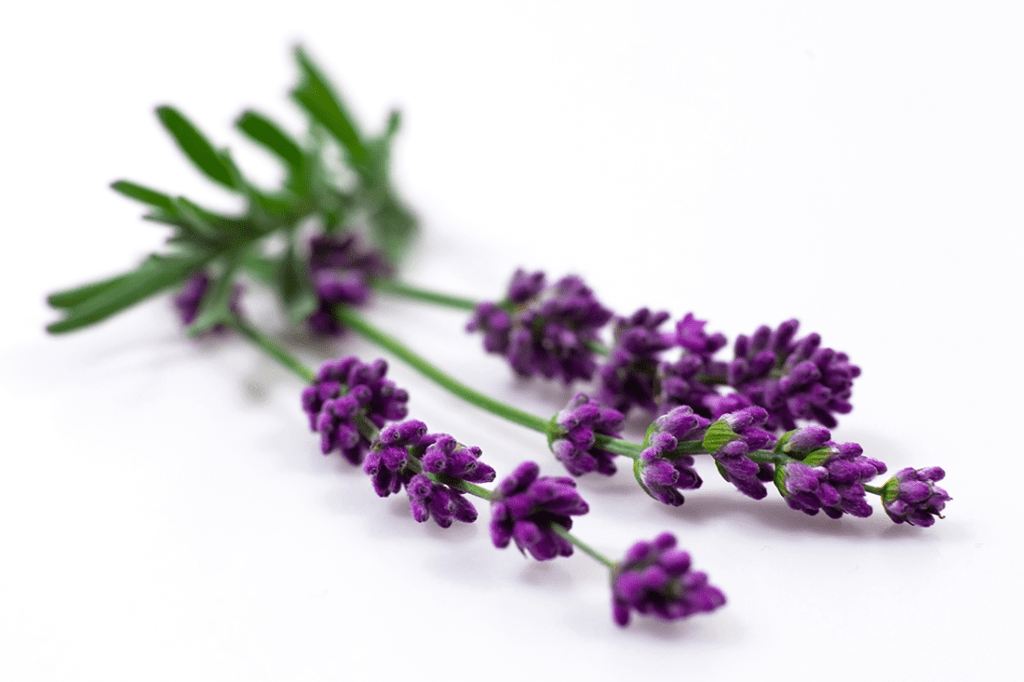 Lavender 101 - The Naturopathic Kitchen
